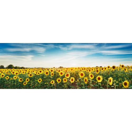 Sunflower field, Plateau... 자연 사진 포스터