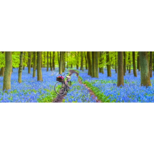 Bicycle in spring forest 계절 사진 포스터