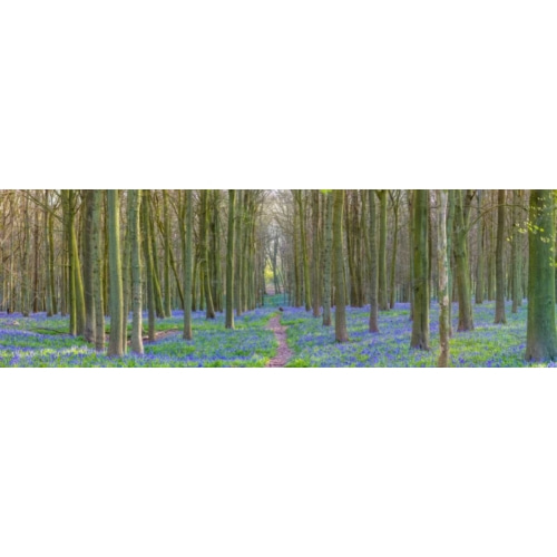 Spring forest with tall trees 계절 사진 포스터